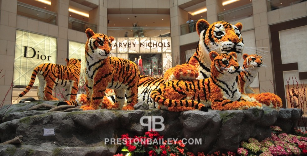 art installation flowers color|orange color|white tigers